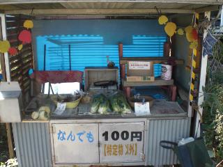 hatofukitsugao4.jpg